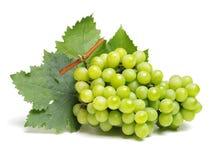 Groene druif royalty-vrije stock afbeeldingen