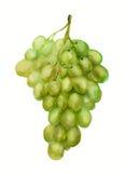 Groene druif Stock Foto