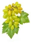 Groene druif Stock Fotografie