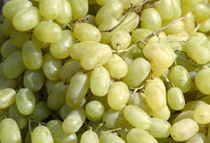 Groene druiven Stock Afbeelding