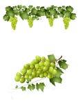 Groene druiven royalty-vrije illustratie