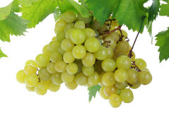 Groene druiven. Royalty-vrije Stock Fotografie