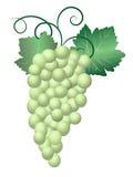 Groene Druiven stock illustratie