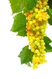 Groene druiven met bladeren Stock Afbeeldingen