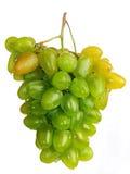 Groene druiven op een witte achtergrond. Royalty-vrije Stock Afbeeldingen