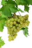 Groene druiven op wit. Royalty-vrije Stock Foto