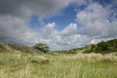 Groene duinen Royalty-vrije Stock Afbeeldingen