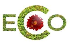 Groene eco van het graswoord met rood die madeliefje op witte achtergrond wordt geïsoleerd royalty-vrije stock foto