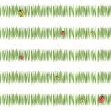 Groene eenvoudige groene van de de prentbriefkaarversheid van grasstrepen de theevegetatie met rode lieveheersbeestjes en geel ge royalty-vrije illustratie