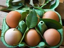 Groene eieren Royalty-vrije Stock Foto's