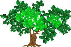 Groene eik Stock Afbeeldingen