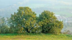 Groene eiken bomen op de heuvels stock fotografie