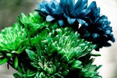Groene en Blauwe Dahlia Flowers stock foto's