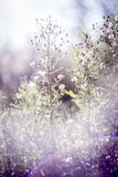 Groene en blauwe gras en bloemen Zonsondergang, August Walking in de weide stock fotografie