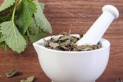 Groene en droge citroenbalsem met mortier, concept herbalism en alternatieve geneeskunde royalty-vrije stock afbeeldingen
