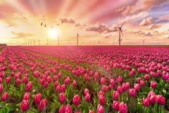 Groene en duurzame energiewereld Stock Foto's