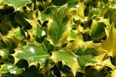 Groene en gele bladeren Stock Afbeeldingen
