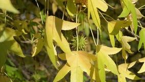 Groene en gele bladeren stock footage