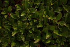 Groene en gele bladerenclose-up Royalty-vrije Stock Foto