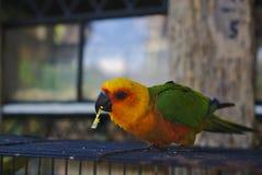 Groene en gele gekleurde papegaai stock foto