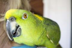 Groene en Gele Papegaai bij zich het Communautaire Verzamelen Stock Foto's
