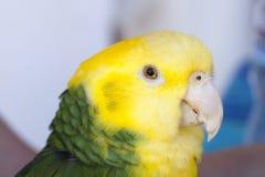 Groene en Gele Papegaai bij zich het Communautaire Verzamelen Royalty-vrije Stock Afbeelding