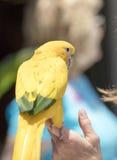 Groene en Gele Papegaai bij zich het Communautaire Verzamelen Royalty-vrije Stock Fotografie