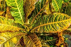 Groene en gele tropische installatiebladeren stock afbeeldingen