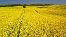 Groene en gele verkrachtingsgebieden in zonnige dag, satellietbeeld, Polen stock footage
