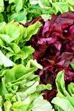 Groene en purpere groenten Royalty-vrije Stock Foto