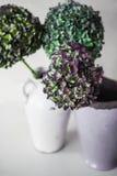 Groene en purpere hydrangea hortensiabloemen op een grijze achtergrond Royalty-vrije Stock Foto