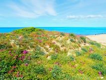 Groene en roze kust in Platamona royalty-vrije stock foto