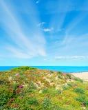 Groene en roze kust in Platamona stock afbeeldingen