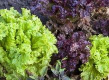 Groene en violette sla royalty-vrije stock fotografie