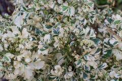Groene en witte bladeren Stock Foto's