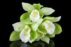 Groene en Witte Orchideeën Stock Afbeeldingen
