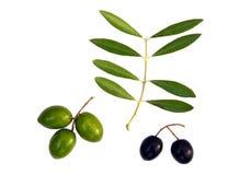 Groene en zwarte olijven Stock Fotografie