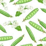 Groene erwten naadloos patroon Vectorillustratie van peulvruchtpeulen met witte bloemen royalty-vrije illustratie