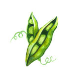 Groene erwten op close-ups witte als achtergrond stock illustratie