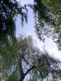 groene exclusiveness van de treeandhemel Royalty-vrije Stock Afbeelding