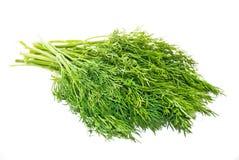 Groene fenne Stock Afbeelding