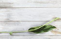 Groene galangal bladeren op de witte houten lijstachtergrond Crea Stock Fotografie
