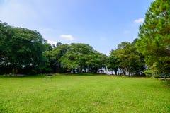 Groene gazon en bomen in tuin Stock Foto's