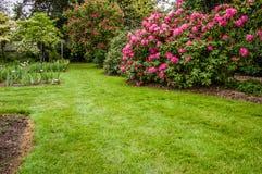 Groene gazon en struiken in een tuin Royalty-vrije Stock Afbeelding