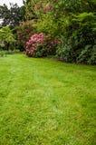 Groene gazon en struiken in een tuin Stock Fotografie