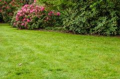 Groene gazon en struiken in een tuin Royalty-vrije Stock Fotografie