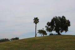 Groene gazon en vlaggen stock foto