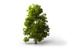 Groene geïsoleerde boom Stock Afbeelding