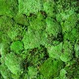 Groene geïsoleerde mosmuur objekcts Royalty-vrije Stock Afbeeldingen