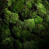 Groene geïsoleerde mosmuur objekcts Royalty-vrije Stock Foto